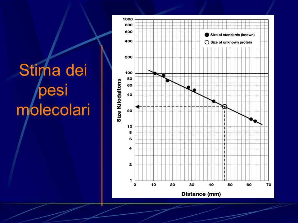 Stima dei pesi molecolari