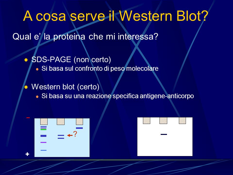 A cosa serve il Western Blot