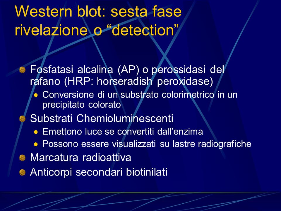 Western blot: sesta fase rivelazione o detection