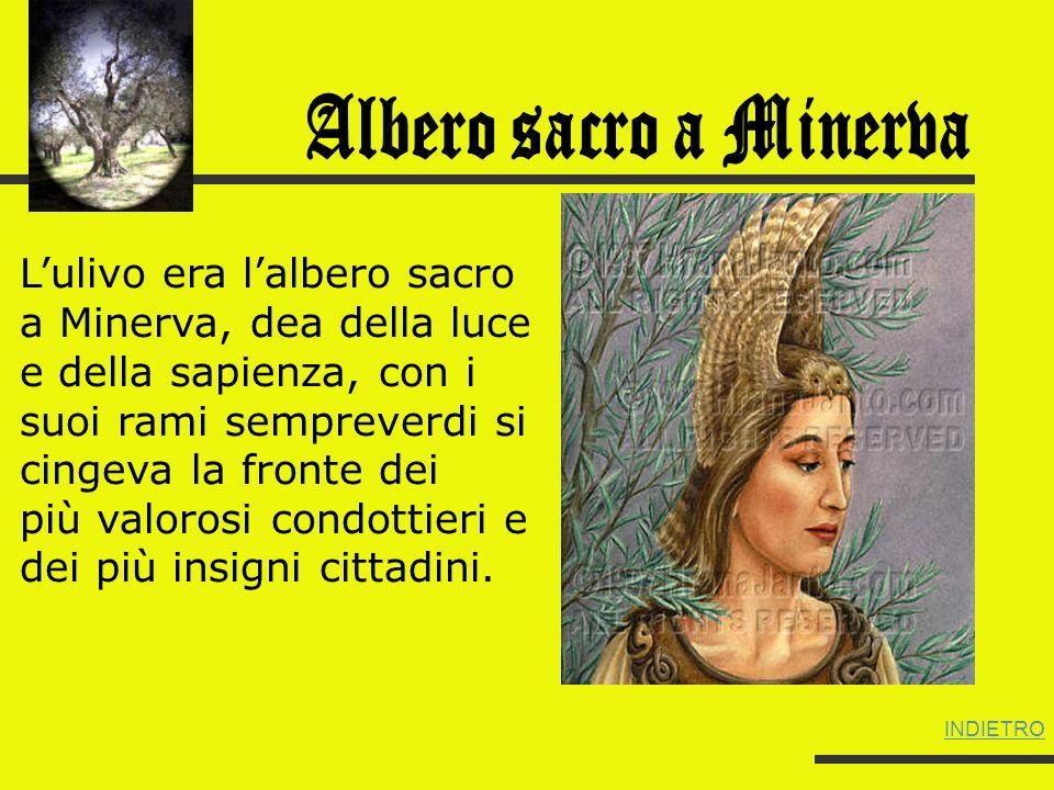 Albero sacro a Minerva