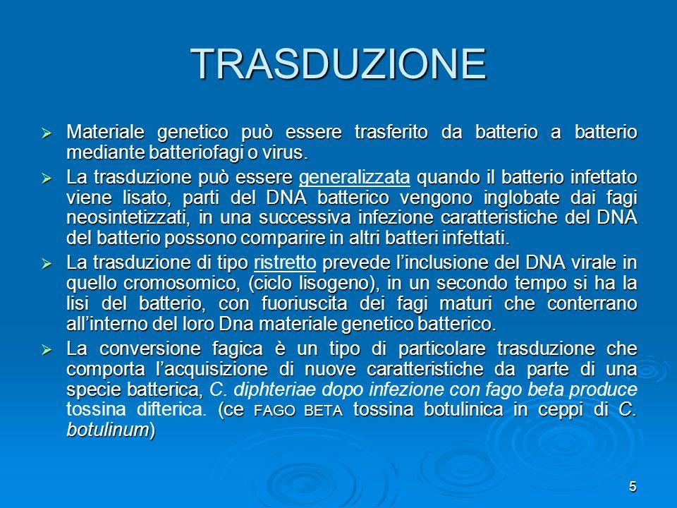 TRASDUZIONE Materiale genetico può essere trasferito da batterio a batterio mediante batteriofagi o virus.