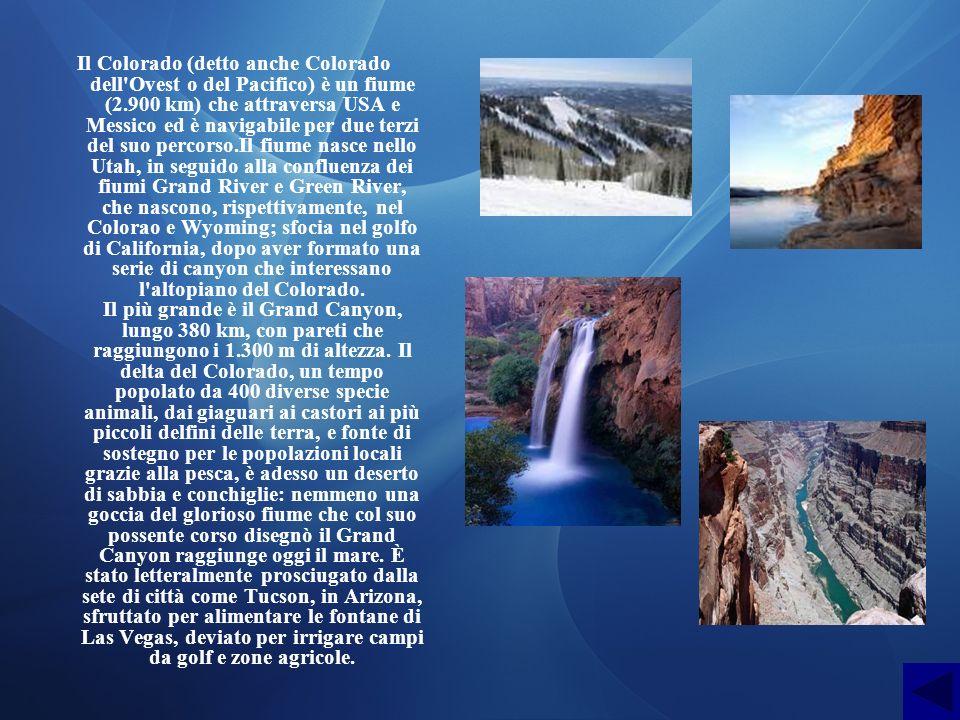 Il Colorado (detto anche Colorado dell Ovest o del Pacifico) è un fiume (2.900 km) che attraversa USA e Messico ed è navigabile per due terzi del suo percorso.Il fiume nasce nello Utah, in seguido alla confluenza dei fiumi Grand River e Green River, che nascono, rispettivamente, nel Colorao e Wyoming; sfocia nel golfo di California, dopo aver formato una serie di canyon che interessano l altopiano del Colorado.