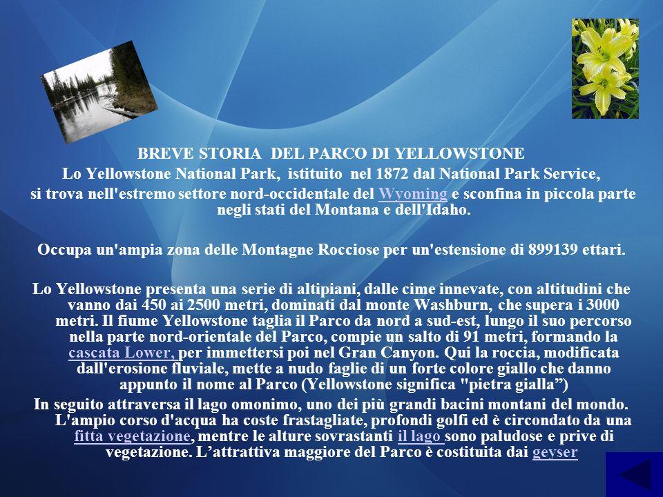 BREVE STORIA DEL PARCO DI YELLOWSTONE