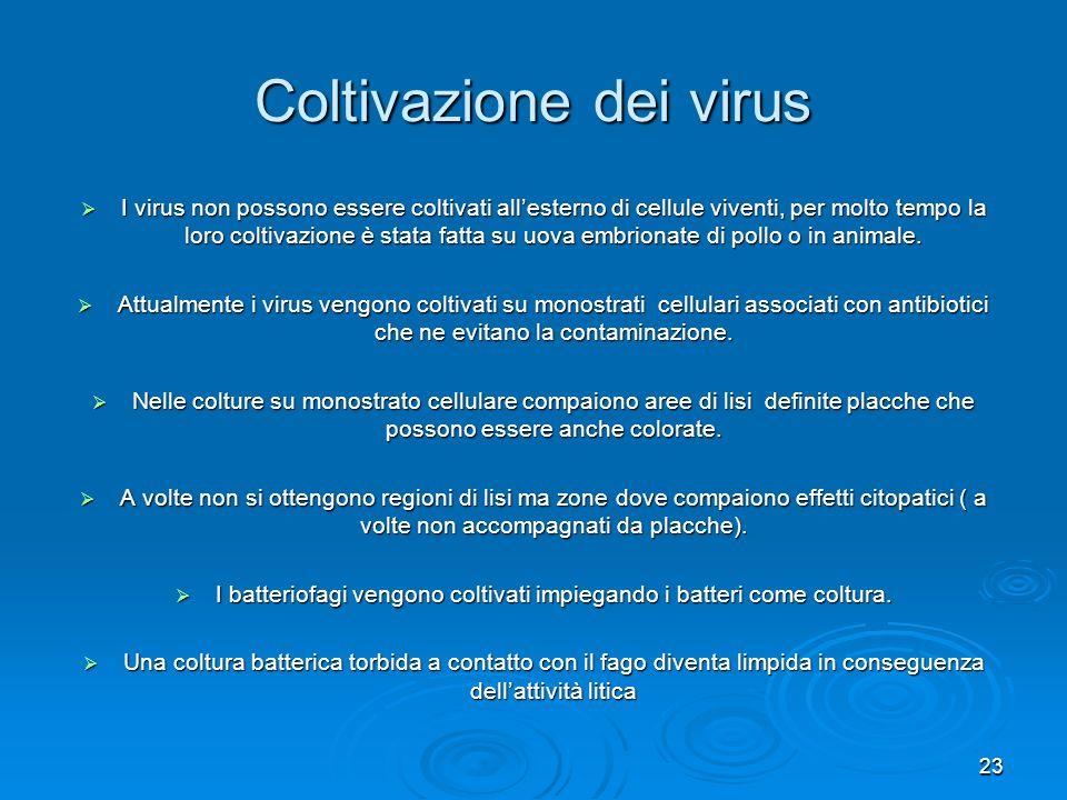 Coltivazione dei virus