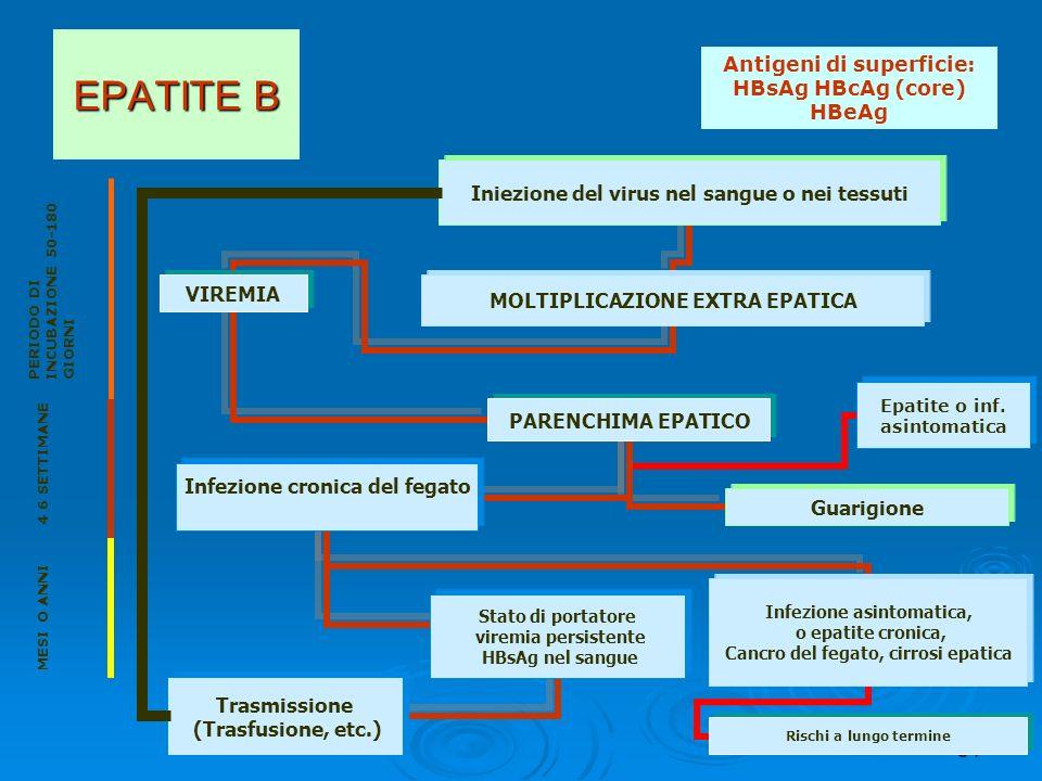 Antigeni di superficie: HBsAg HBcAg (core) HBeAg