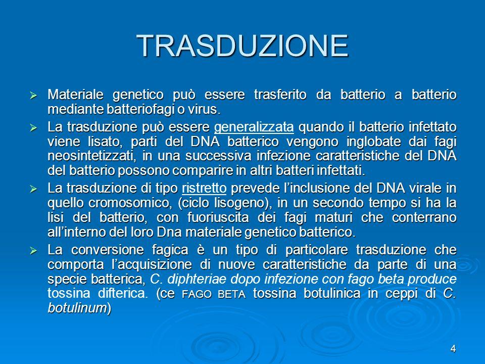 TRASDUZIONEMateriale genetico può essere trasferito da batterio a batterio mediante batteriofagi o virus.