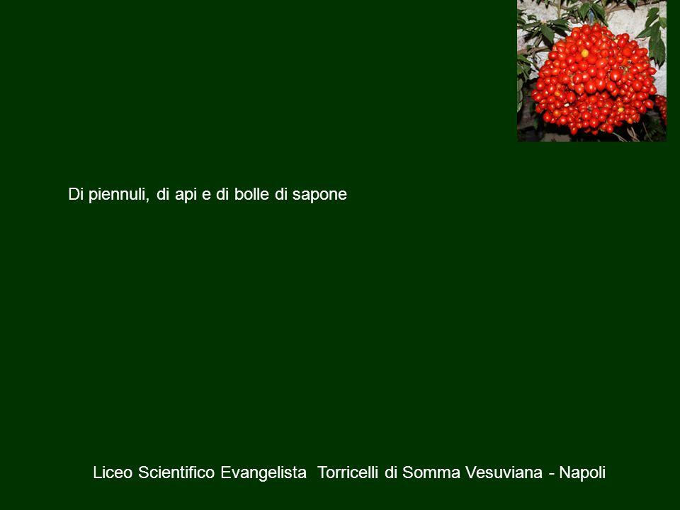 Liceo Scientifico Evangelista Torricelli di Somma Vesuviana - Napoli