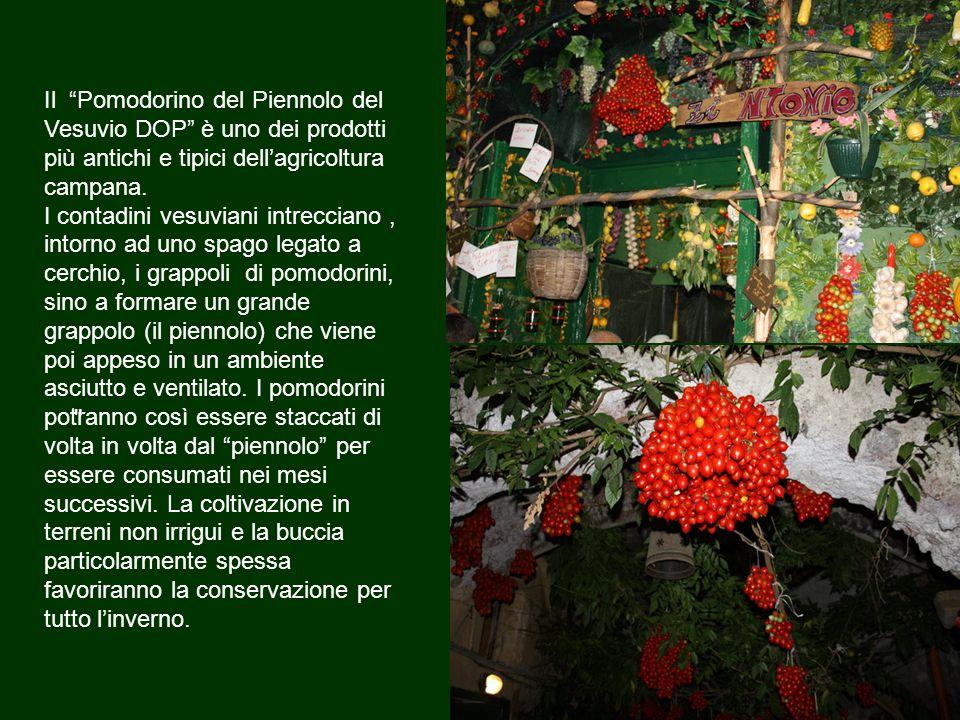 Il Pomodorino del Piennolo del Vesuvio DOP è uno dei prodotti più antichi e tipici dell'agricoltura campana.