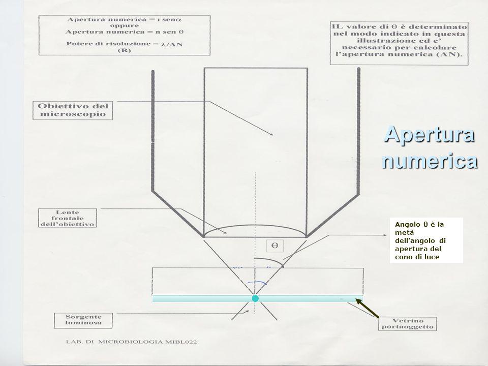 Apertura numerica Angolo θ è la metà dell'angolo di apertura del cono di luce