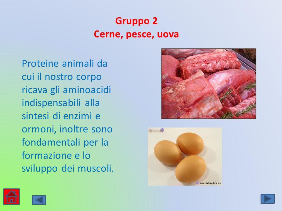 Gruppo 2 Cerne, pesce, uova.