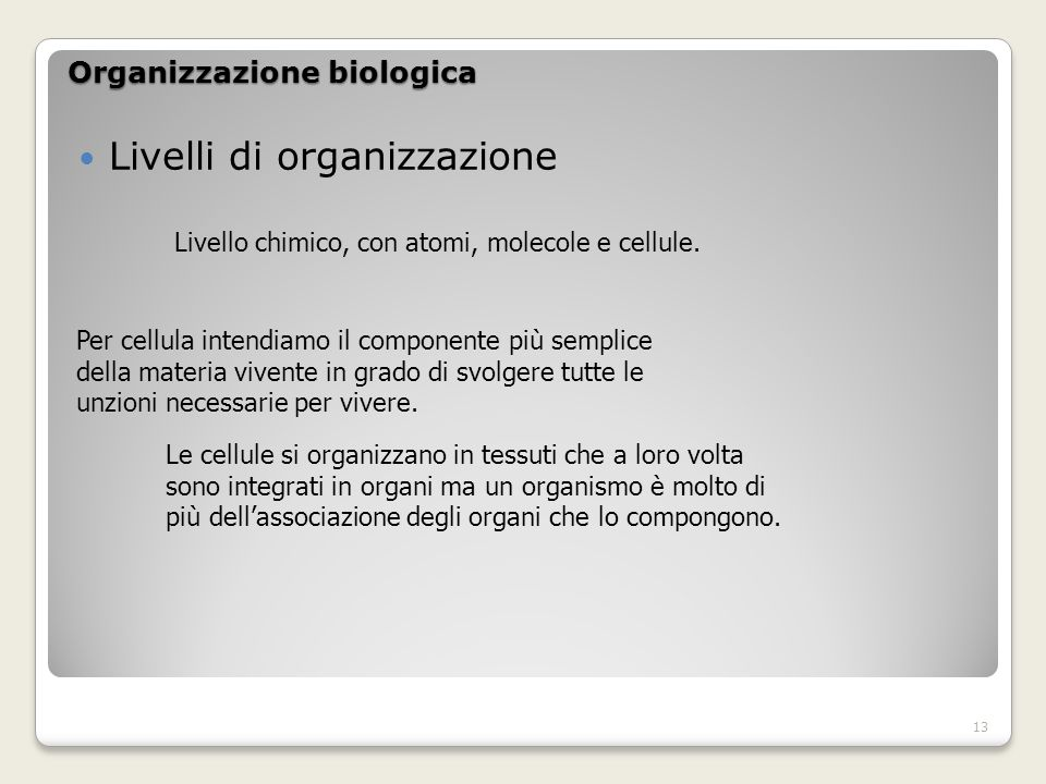 Organizzazione biologica