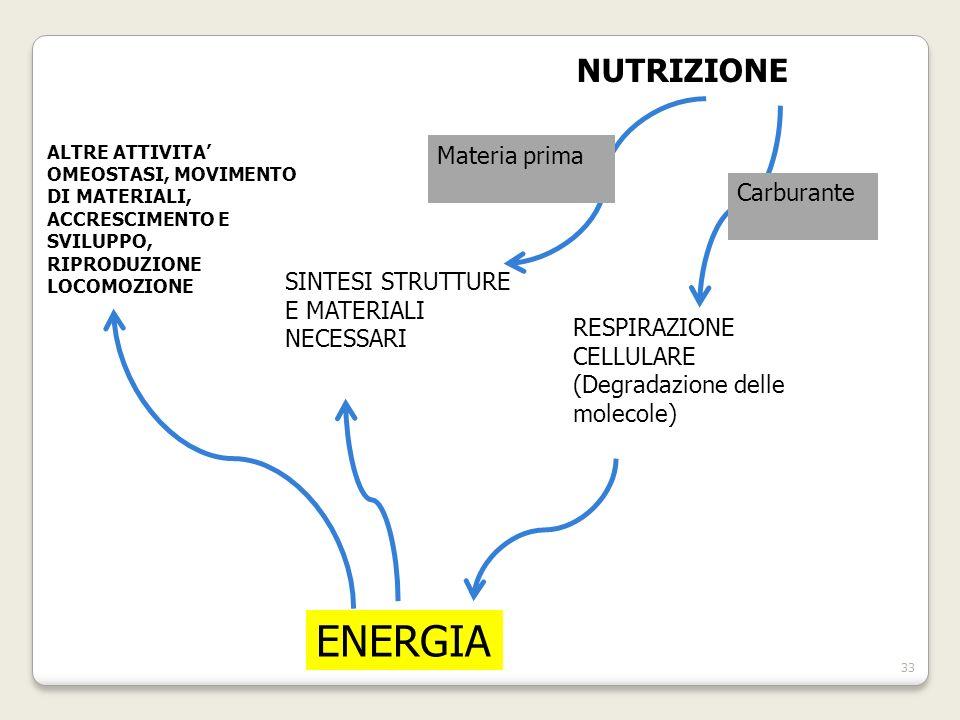 ENERGIA NUTRIZIONE Materia prima Carburante