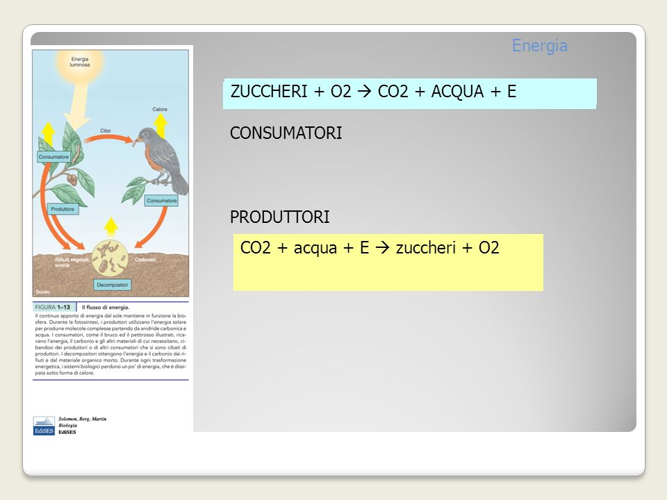 Energia ZUCCHERI + O2  CO2 + ACQUA + E. ZUCCHERI + O2  CO2 + ACQUA + E. CONSUMATORI. PRODUTTORI.