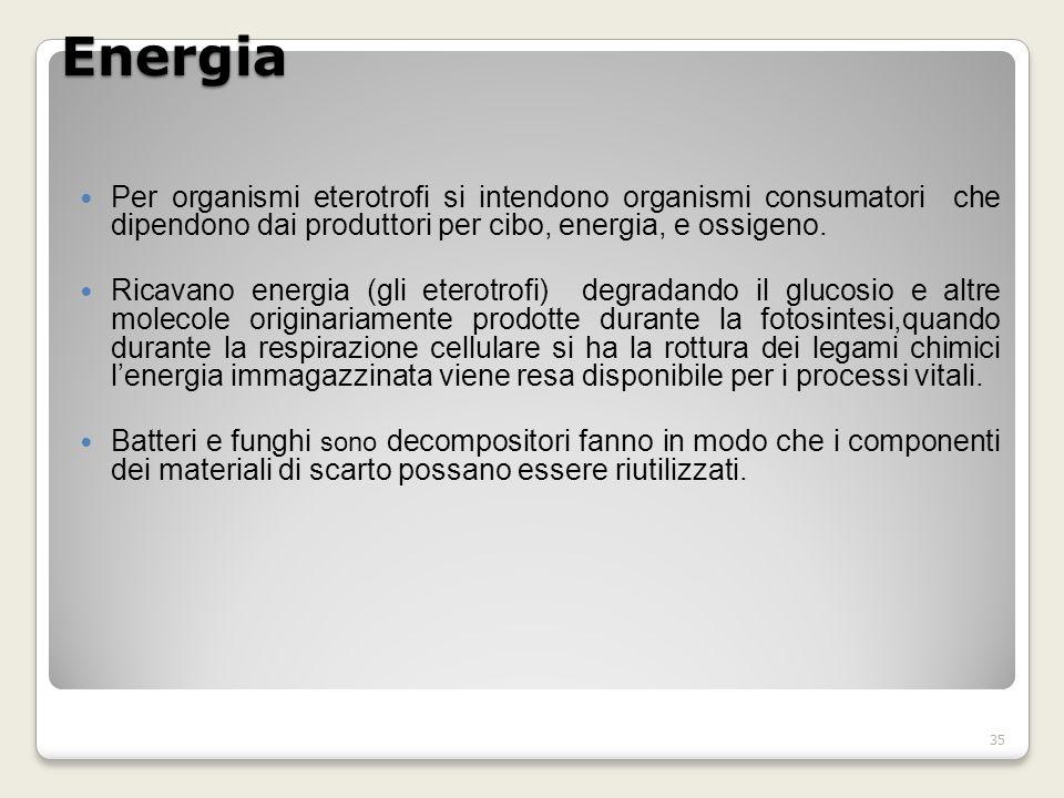 Energia Per organismi eterotrofi si intendono organismi consumatori che dipendono dai produttori per cibo, energia, e ossigeno.