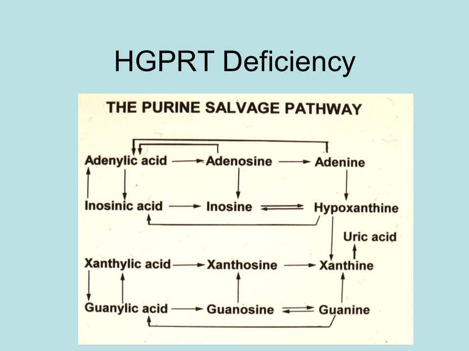 HGPRT Deficiency