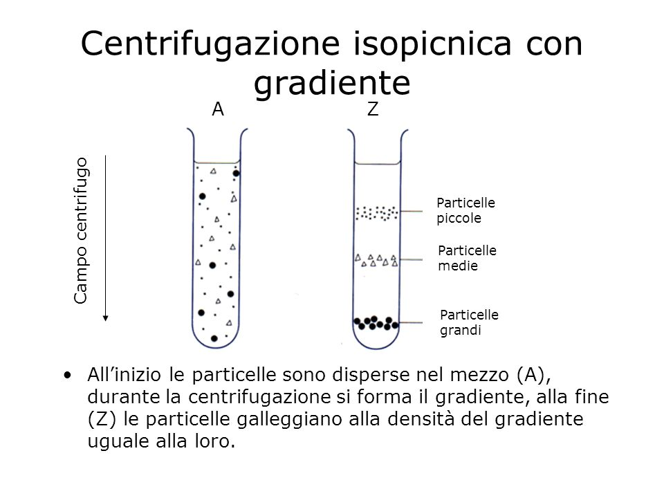 Centrifugazione isopicnica con gradiente