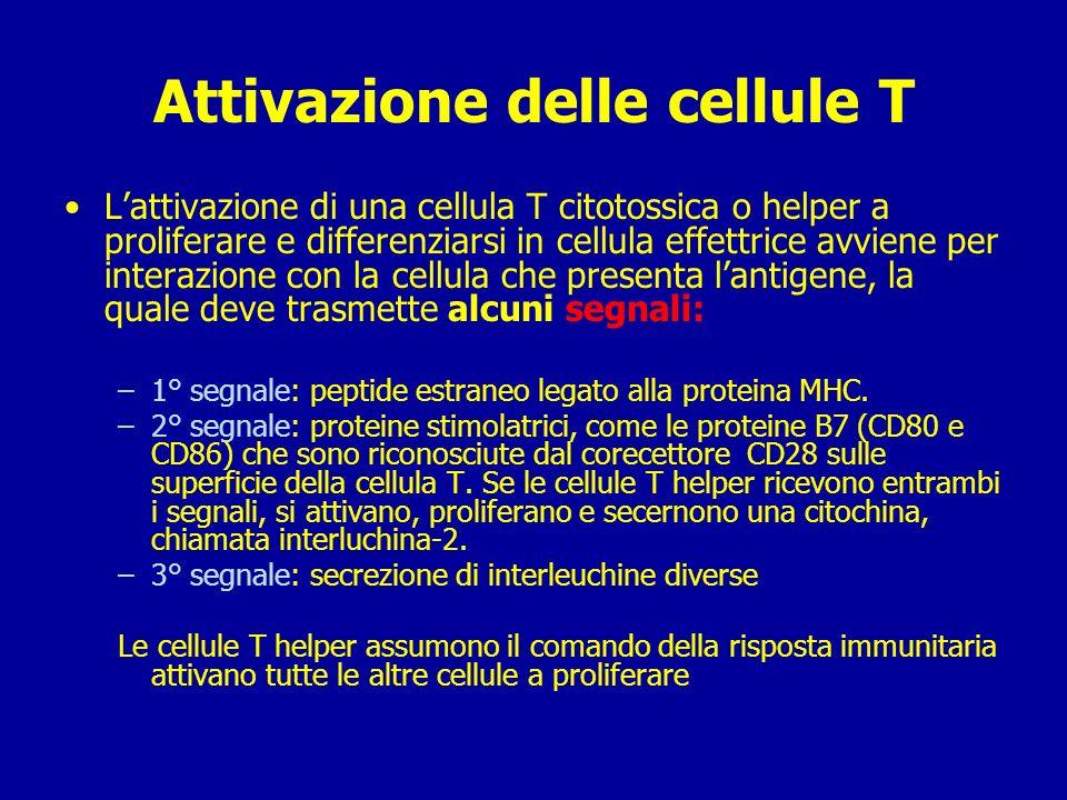 Attivazione delle cellule T