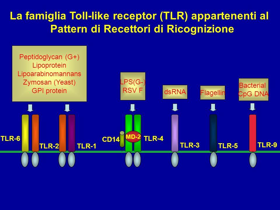 La famiglia Toll-like receptor (TLR) appartenenti al