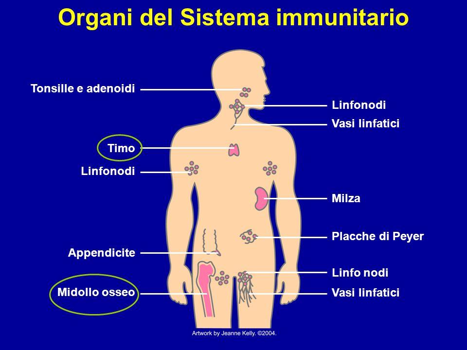 Organi del Sistema immunitario