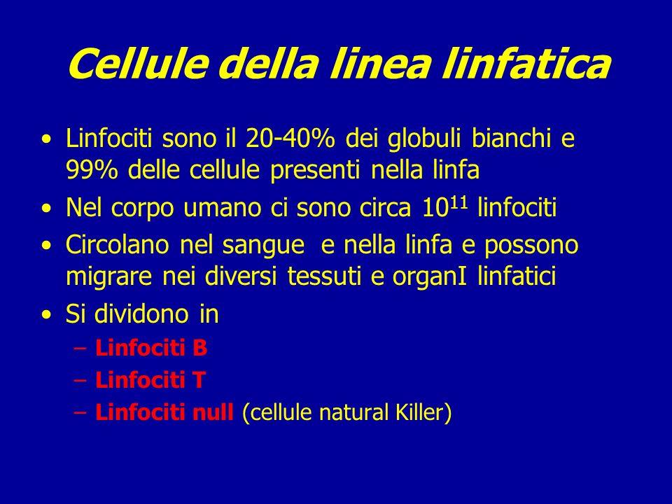 Cellule della linea linfatica