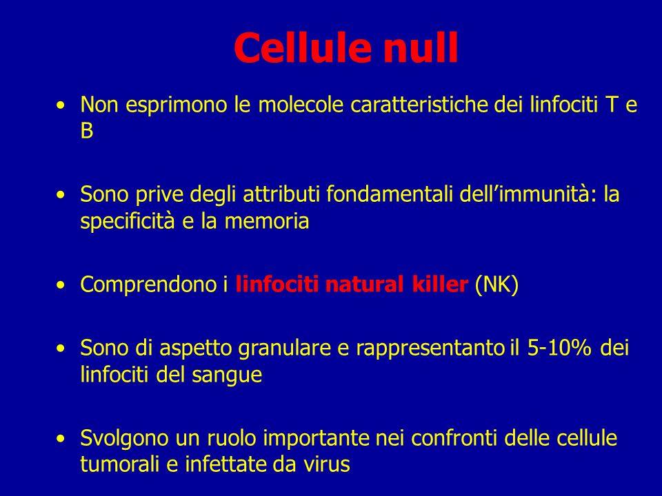 Cellule null Non esprimono le molecole caratteristiche dei linfociti T e B.