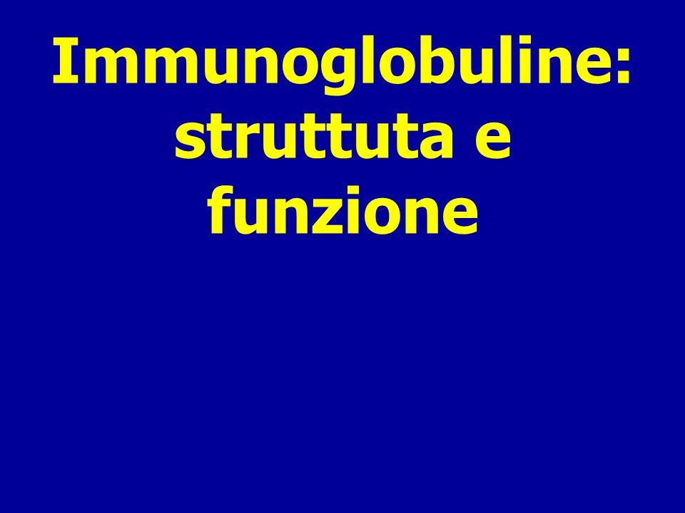 Immunoglobuline: struttuta e funzione