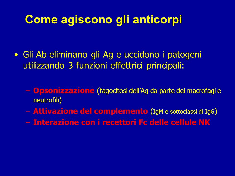 Come agiscono gli anticorpi