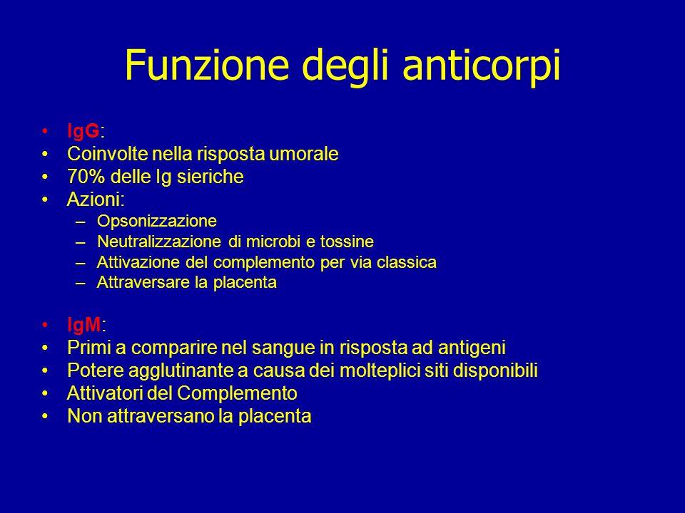 Funzione degli anticorpi