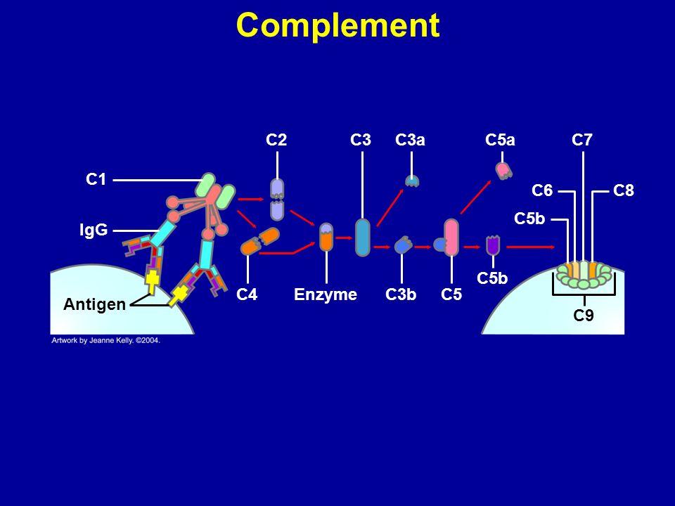 Complement C2 C3 C3a C5a C7 C1 C6 C8 C5b IgG C5b C4 Enzyme C3b C5