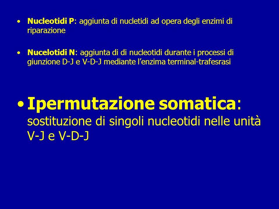 Nucleotidi P: aggiunta di nucletidi ad opera degli enzimi di riparazione