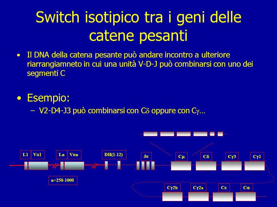 Switch isotipico tra i geni delle catene pesanti