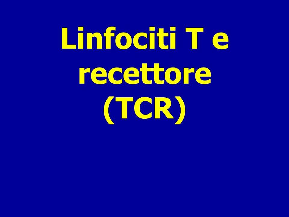 Linfociti T e recettore (TCR)