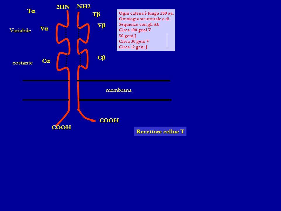2HN NH2 Ta Tb Vb Va Variabile Cb Ca costante membrana COOH