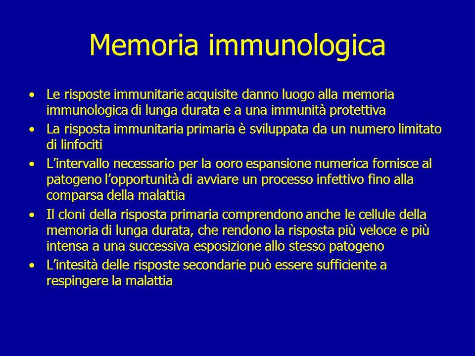 Memoria immunologica Le risposte immunitarie acquisite danno luogo alla memoria immunologica di lunga durata e a una immunità protettiva.