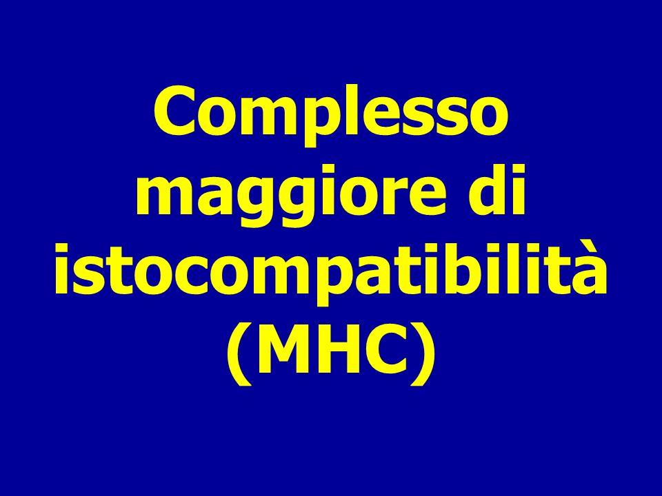 Complesso maggiore di istocompatibilità (MHC)