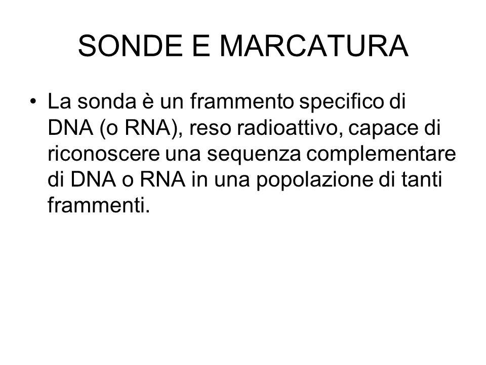 SONDE E MARCATURA