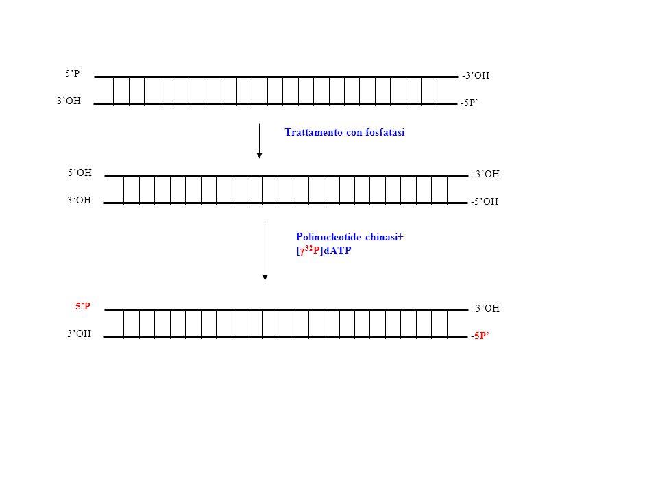 Trattamento con fosfatasi