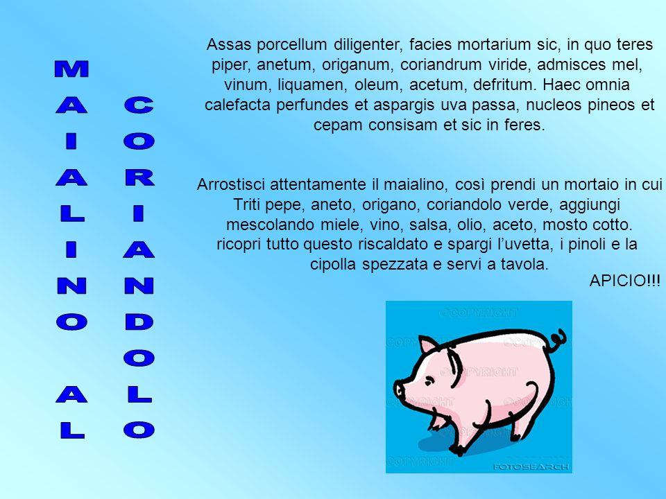 MAIALINO AL CORIANDOLO