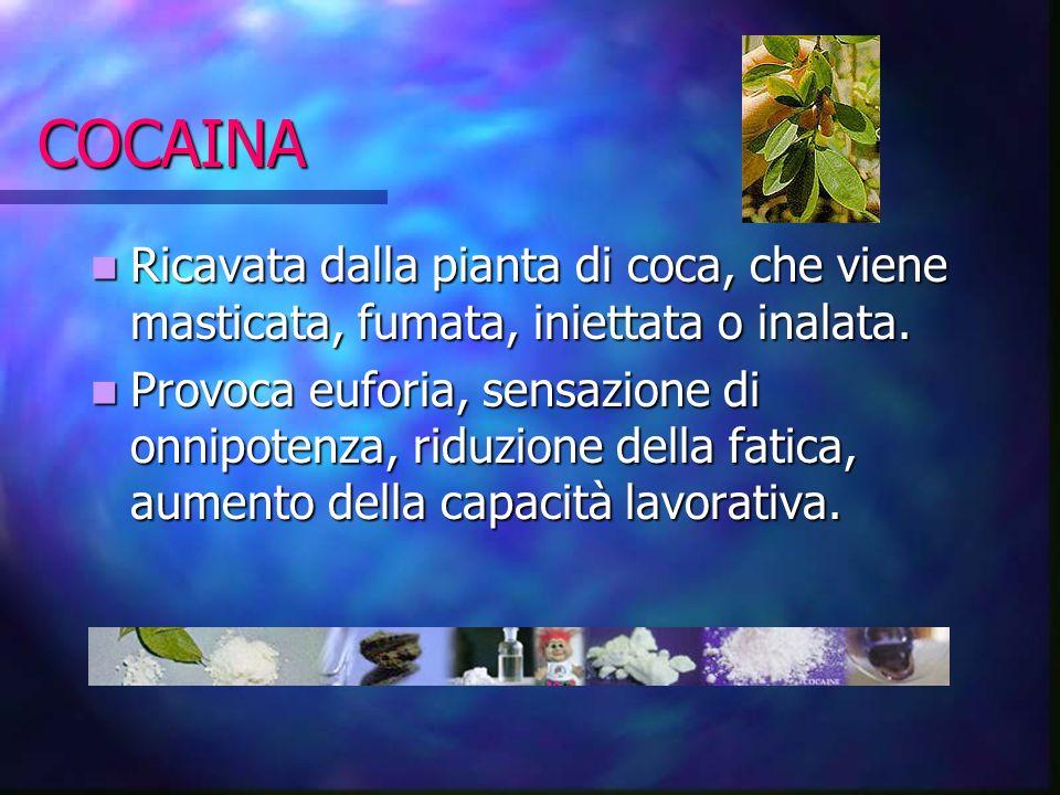 COCAINA Ricavata dalla pianta di coca, che viene masticata, fumata, iniettata o inalata.