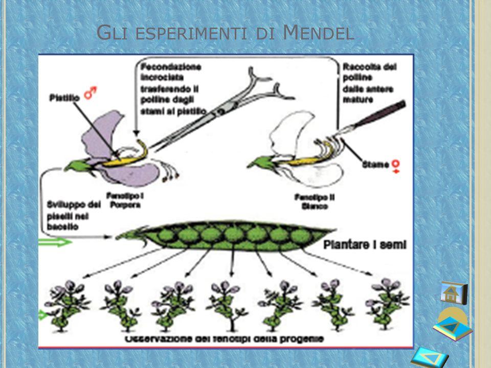 Gli esperimenti di Mendel