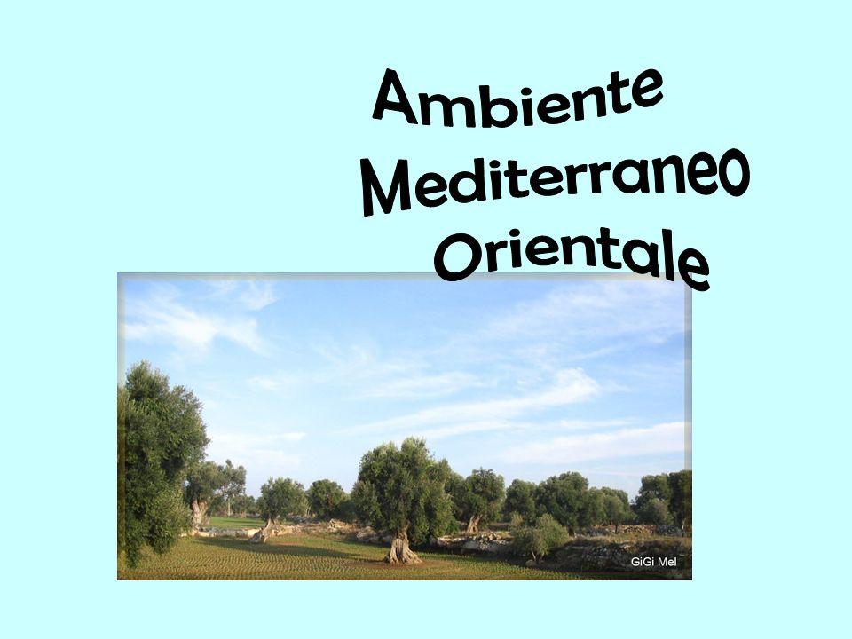 Ambiente Mediterraneo Orientale
