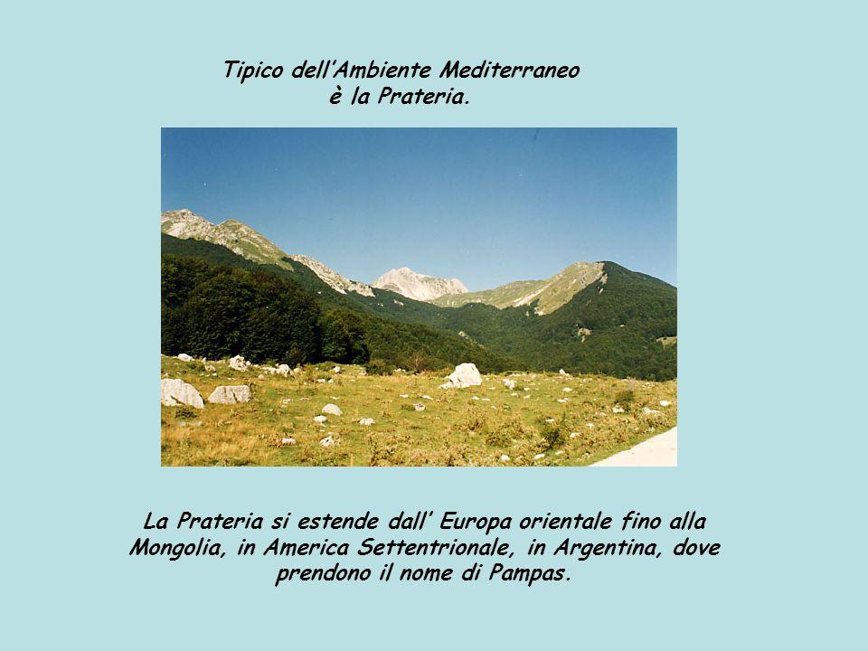 Tipico dell'Ambiente Mediterraneo è la Prateria.