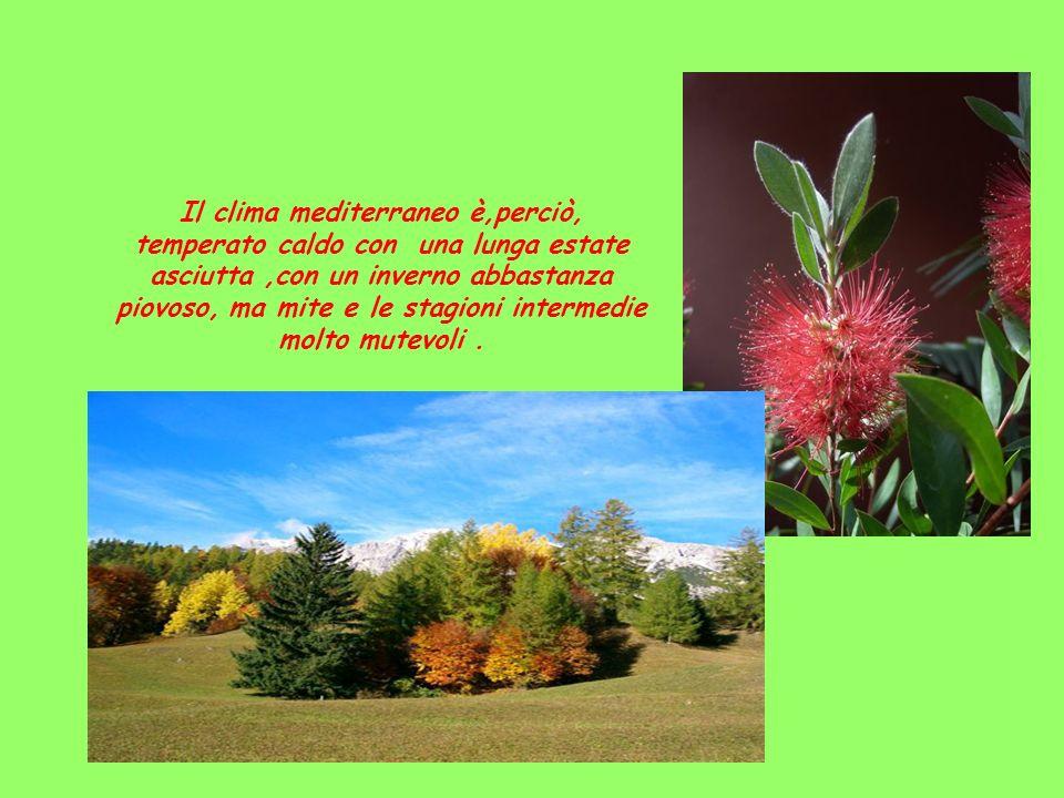Il clima mediterraneo è,perciò, temperato caldo con una lunga estate asciutta ,con un inverno abbastanza piovoso, ma mite e le stagioni intermedie molto mutevoli .