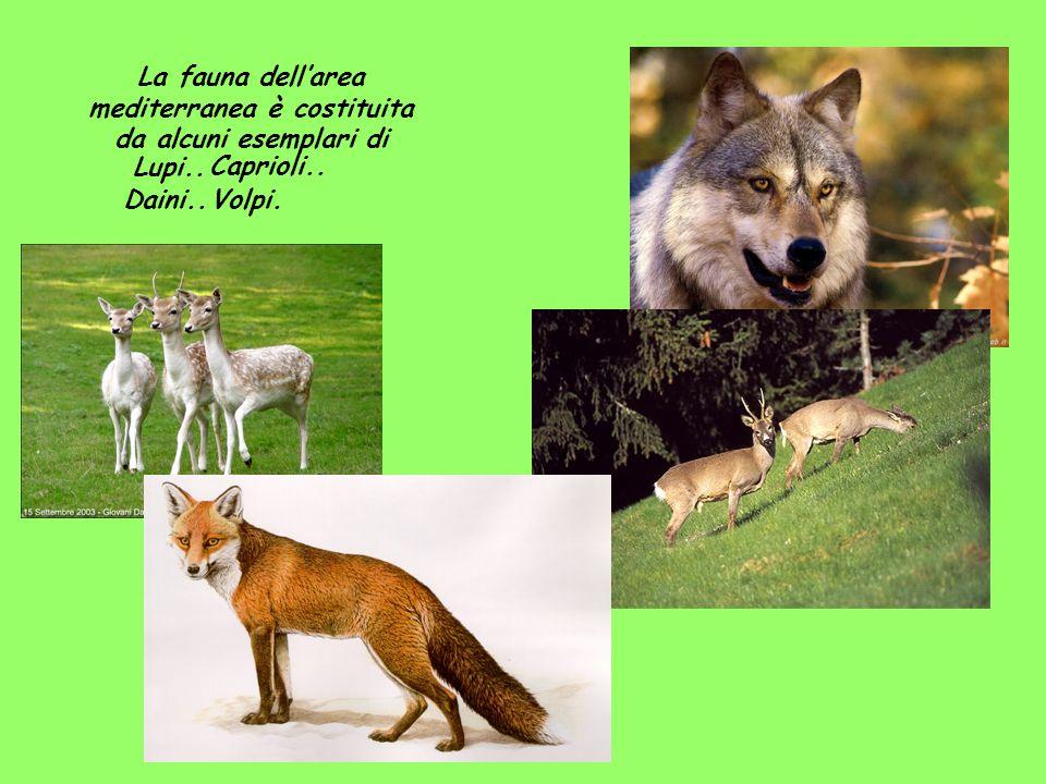 La fauna dell'area mediterranea è costituita da alcuni esemplari di