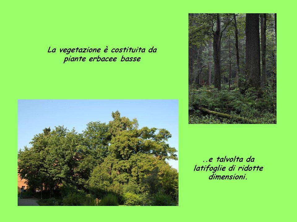 La vegetazione è costituita da piante erbacee basse