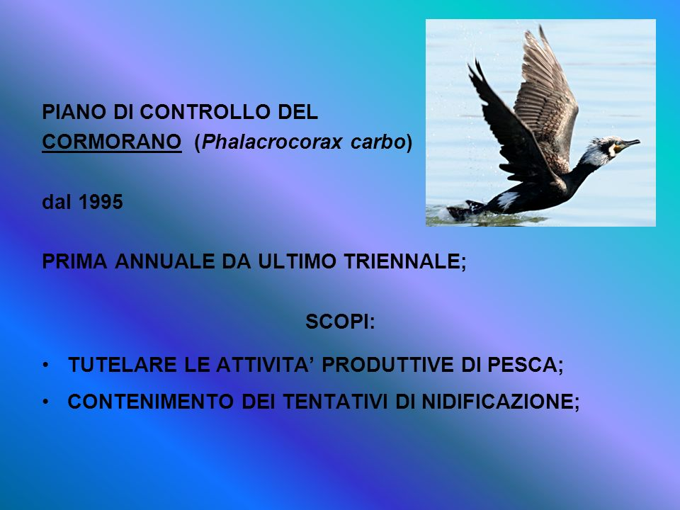 PIANO DI CONTROLLO DELCORMORANO (Phalacrocorax carbo) dal 1995. PRIMA ANNUALE DA ULTIMO TRIENNALE;