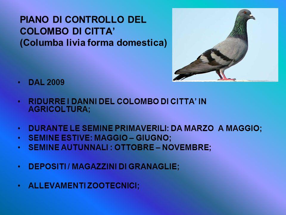 PIANO DI CONTROLLO DEL COLOMBO DI CITTA' (Columba livia forma domestica)