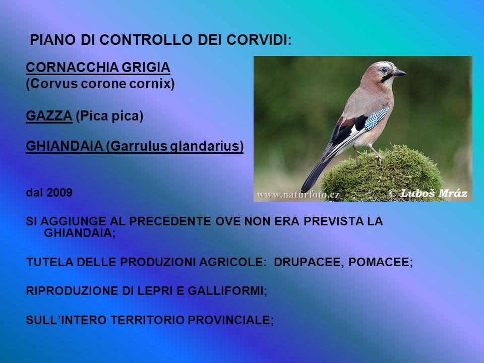 PIANO DI CONTROLLO DEI CORVIDI: