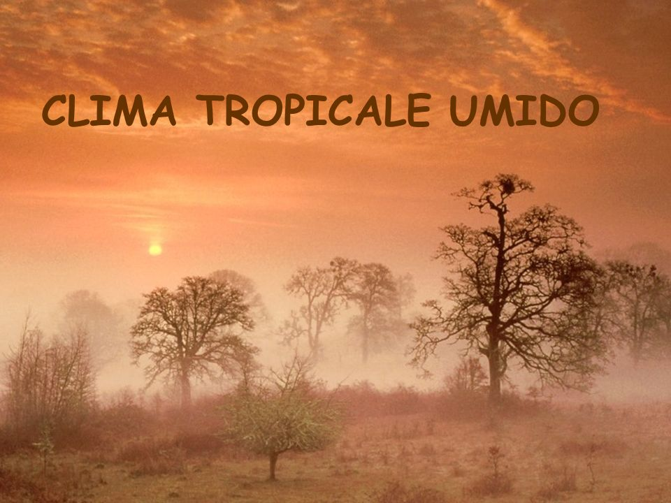 clima tropicale umido ppt video online scaricare