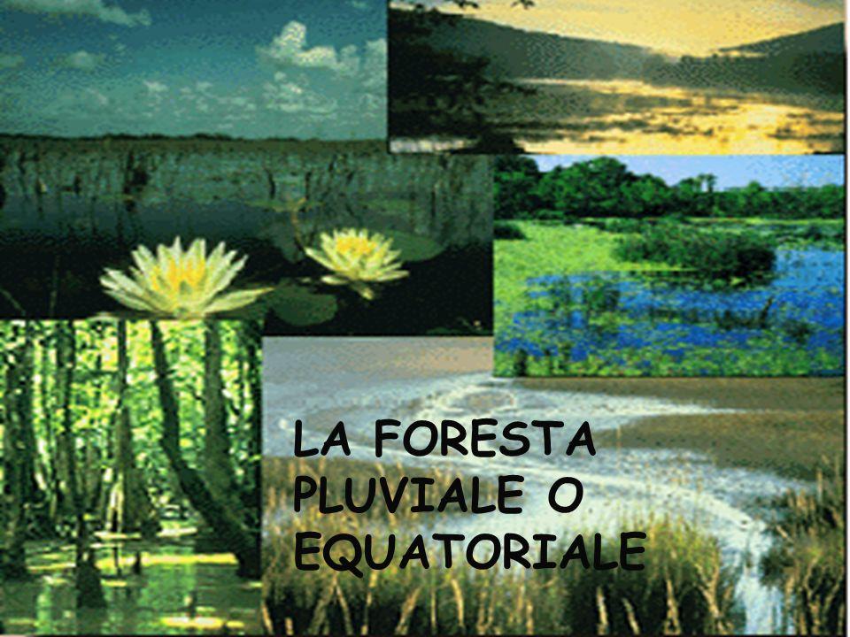 LA FORESTA PLUVIALE O EQUATORIALE
